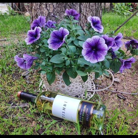 ספל פורח + יין תישבי